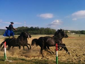 horse_show3